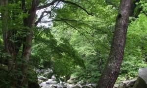 山梨清里の「萌木の村」 本物のリゾート