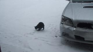 雪用ワイパーで、雪道でも視界確保