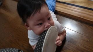 赤ちゃん 8ヶ月
