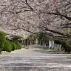 被リンクは命の次に大切 – わかったニュース 2014/4/3-4/9