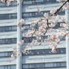 フルマラソン前のピンチ – 静岡暮らし記 4/8-4/14