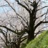 入園式 – 静岡暮らし記 4/1-4/7