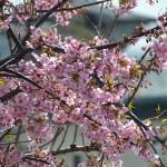 春のフルマラソン対策 – かすみがうらマラソンまで6週間