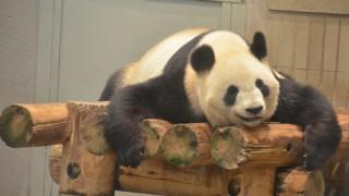 上野動物園のパンダを短時間で見る方法