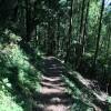 夏はトレイルラン – 週記 2014/6/7-6/13
