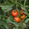 農業による副業の可能性について