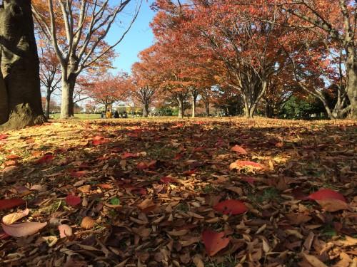 秋の公園 枯れ葉