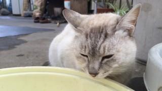 猫背を矯正する効果的な方法