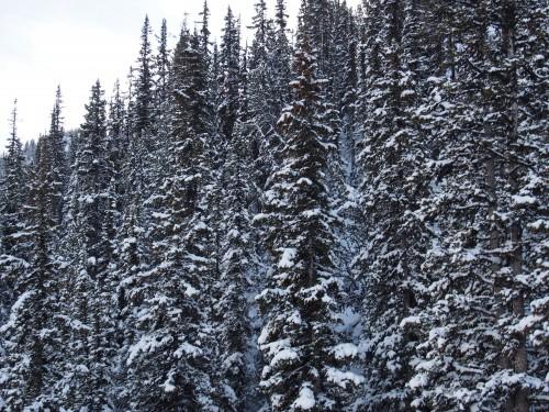 サルファー山の森