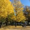 【週記】冬到来にして、最後の紅葉。 上野公園