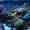 弱点は個性になり、ブランドにつながる 地方水族館、竹島水族館の意地