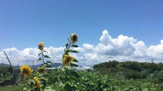 【週記】ようやく梅雨明け2017/7/15-7/21